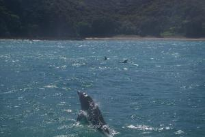 There are the dolphins.