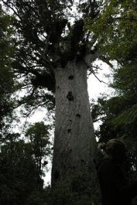 Tane Mahuta would have been the greatest Ent ever.
